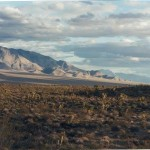 This is the beatiful Gold Basin Arizona meteorite field terrain. You are in a Joshua Tree forest.